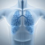 Clean and healthy lungs Stock Photos