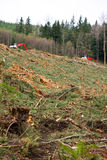 Clearcut Logging In Pacific Northwest Royalty Free Stock Photos