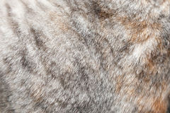 Close up fur of a grey cat Royalty Free Stock Images