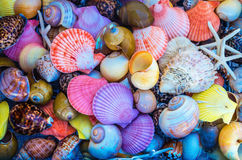 Closeup of colorful sea shells in different shapes Royalty Free Stock Photo