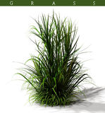 Clump of grass Royalty Free Stock Image