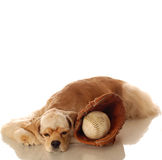 Cocker spaniel and baseball Royalty Free Stock Photo