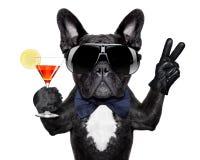 Cocktail dog Stock Photos