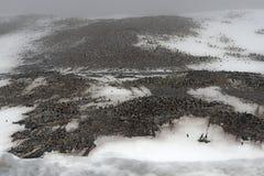 Colonie de freux de pingouin d'Adelie, île de Gourdin, bruit antarctique, Anarctica Photographie stock libre de droits
