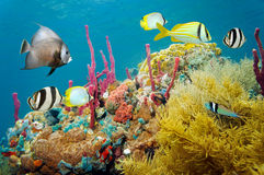 Colored underwater marine life in a coral reef Stock Image