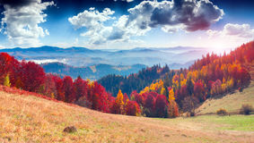 Colorful autumn landscape in the mountain village. Foggy morning Stock Image