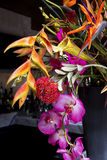 Colorful exotic floral arrangement Stock Image