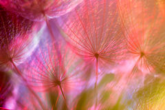 Colorful Pastel Background - vivid abstract dandelion flower Royalty Free Stock Photos