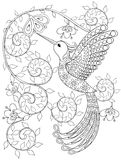 Coloring page with Hummingbird, zentangle flying bird  for adult Stock Image