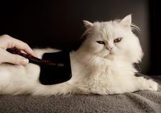 Combing fur Royalty Free Stock Photo
