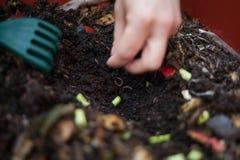 composting Royalty-vrije Stock Fotografie