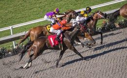 Concurrentie van het raspaard Stock Foto's