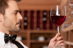 Confident sommelier. Royalty Free Stock Photography