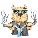 Cool cat Royalty Free Stock Photo