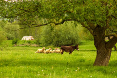 Countrylife Royalty Free Stock Photo