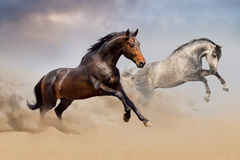 Couple of horse run on desert Royalty Free Stock Photos