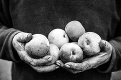 Cracked dirty old hands Royalty Free Stock Photos