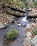 Creek in Autumn Royalty Free Stock Image