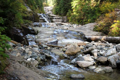 A Creek in the Pacific Northwest Stock Photo