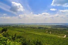 Culture  vineyard Stock Image