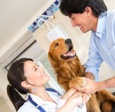 Dog giving his paw Royalty Free Stock Image
