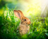 Cute Little Easter Bunny Stock Images