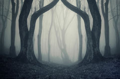 Dark forest with fog and symmertical huge strange trees on halloween Royalty Free Stock Photo