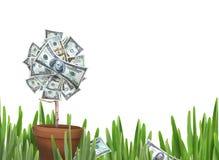 De bloem van het geld Royalty-vrije Stock Foto's