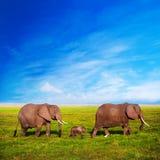 De familie van olifanten op savanne. Safari in Amboseli, Kenia, Afrika Stock Fotografie