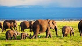 De familie van olifanten op savanne. Safari in Amboseli, Kenia, Afrika Royalty-vrije Stock Afbeelding