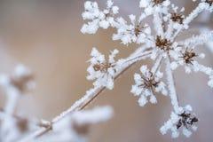 De winterscène Royalty-vrije Stock Afbeelding