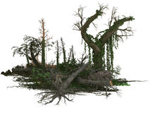 Dead trees and plants Royalty Free Stock Image