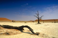 Deadvlei (woestijn Namib) Stock Afbeeldingen