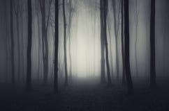 Deep dark woods on Halloween night Stock Photos