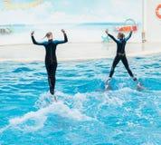 Delfinshowplats Arkivbild