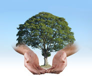 In den sicheren Händen eines Baum-Chirurgen Lizenzfreie Stockfotografie