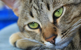 Details of cats nose Stock Images