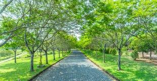 Die Straßen- und Wegbäume Lizenzfreies Stockbild