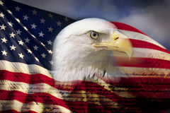 Digital composite: American bald eagle and flag is underlaid with the handwriting of the US Constitution Stock Photo