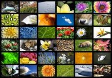 Digitale aard Royalty-vrije Stock Fotografie
