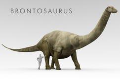 Dinosaur Brontosaurus And Human Size Comparison Stock Photography
