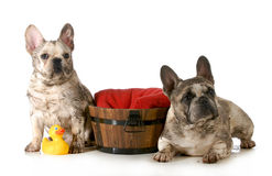 Dirty dogs Royalty Free Stock Photo