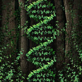 DNA Nature Royalty Free Stock Photography