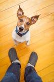 Dog begging Stock Photos