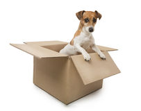 Dog in the box Royalty Free Stock Image