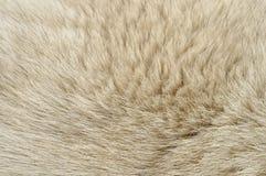 Dog fur Stock Image