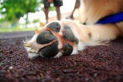 Dog Paw Stock Photo