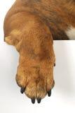 Dog paw Royalty Free Stock Photos