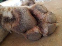 Dog paw Stock Photos