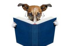 Dog reading a book Royalty Free Stock Photos